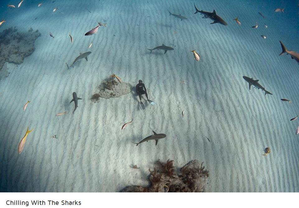 foto-squali